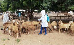 يوم علاجي إرشادي مجاني للثروة الحيوانية بالنهود
