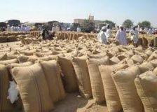 زيادة في وارد السمسم بسوق المحاصيل بسنار