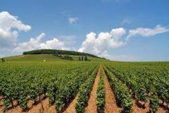 الرهد الزراعية تكمل زراعة محاصيل العروة الشتوية