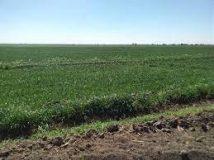 25مايو إنطلاق زراعة محاصيل العروة الصيفية بمشروع الجزيرة