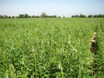 فريق من الزراعة الإتحادية لدراسة  تكاليف الإنتاج للمحاصيل بشمال كردفانولاية شمال كردفان
