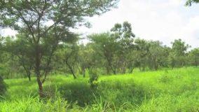 غابات شمال كردفان تستهدف زراعة 5  آلاف  فدان  بالأحزمه الشجرية