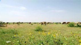 مخيم لتدريب الرعاة وتقديم خدمات وقائية وعلاجية للحيوان بشمال كردفان